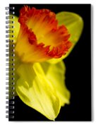 Ruffled Cup Spiral Notebook
