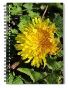 Ruffled Dandelion Spiral Notebook