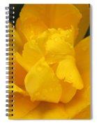 Yellow Ruffled Parrot Tulip Flower Spiral Notebook