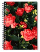 Ruffly Red Tulips Square Spiral Notebook