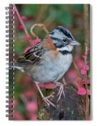 Rufous-collared Sparrow Spiral Notebook