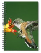 Rufous Hummingbird At Tiger Lily Spiral Notebook