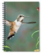 Rufous Hummingbird Female At Monkey Spiral Notebook