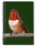 Rufous Hummingbird Spiral Notebook