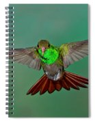 Rufous-tailed Hummer Spiral Notebook