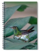 Rufous-tailed Hummingbird On Nest Spiral Notebook