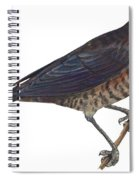 Rusty Blackbird  Spiral Notebook