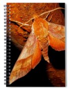 Rusty Sphinx Moth Spiral Notebook