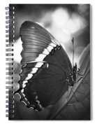 Rusty Tip Butterfly Black And White Spiral Notebook
