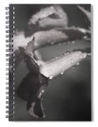 Sabi Star Spiral Notebook