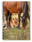 Safe Spiral Notebook