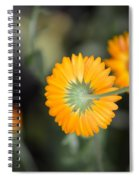 Saffron Wand Spiral Notebook