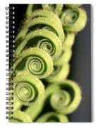 Sago Palm Leaf - 3 Spiral Notebook