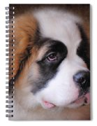 Saint Bernard Puppy Spiral Notebook