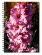 Salmon Color Glad Spiral Notebook