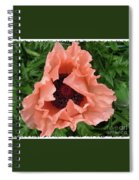 Salmon Colored Poppy Spiral Notebook