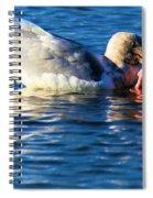 Salmon Delight Spiral Notebook