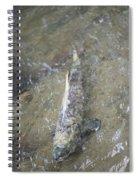 Salmon Spawning Spiral Notebook