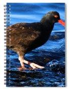 Salt Creek Catcher Spiral Notebook