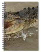 Saltwater Crocodile Spiral Notebook