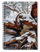 San Jacinto Fallen Tree Spiral Notebook