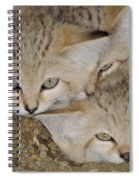 Sand Cat Felis Margarita Spiral Notebook