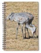Sand Hill Cranes Eat Togeather Spiral Notebook
