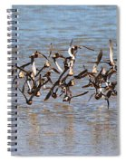 Sand Pipers Arrive At The Grp Spiral Notebook