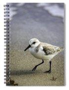 Sanderling On The Shore Spiral Notebook