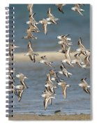 Sanderlings And Dunlins In Flight Spiral Notebook