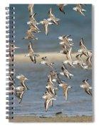 Sanderlings And Dunlins In Flight Spiral Notebook