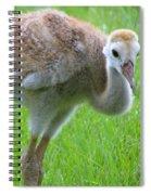 Sandhill Crane Chick I Spiral Notebook