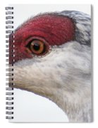Sandhill Crane Eye Spiral Notebook