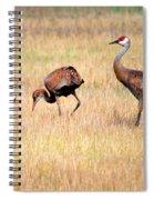 Sandhill Crane Family I Spiral Notebook