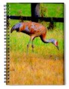 Sandhill Crane I Spiral Notebook