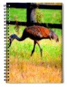 Sandhill Crane IIi Spiral Notebook