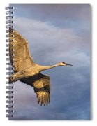 Sandhill Crane In Flight Spiral Notebook