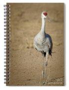 Sandhill Crane In The Spotlight Spiral Notebook