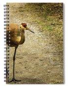 Sandhill Crane On The Road Spiral Notebook