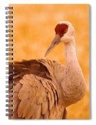 Sandhill Crane Posing Spiral Notebook