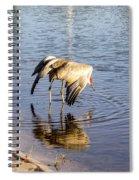 Sandhill Crane Vs Alligator Spiral Notebook