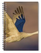 Sandhill Crane Young Adult Spiral Notebook