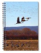Sandhill Cranes 6 Spiral Notebook