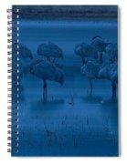 Sandhill Cranes In The Dark Bosque Del Apache Wildlife Refuge  Spiral Notebook