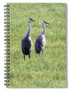Sandhill Cranes In Wisconsin Spiral Notebook