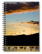Sandhill Cranes In New Mexico Spiral Notebook