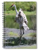 Sandhill Jumping Spiral Notebook