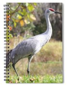 Sandhill Passing By Spiral Notebook