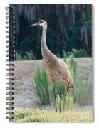 Sandhill Standing Tall Spiral Notebook