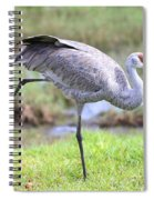 Sandhill Stretch 2 Spiral Notebook